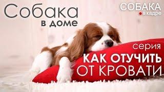 Как отучить собаку от кровати. Собака в доме.(Как отучить собаку от кровати? Вы узнаете в передаче из цикла передач о собаках, их воспитании и дрессировке..., 2015-03-20T08:23:38.000Z)