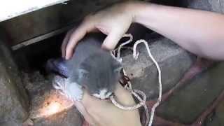 Kitten Rescue