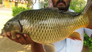 Cooking BIG Catla Fish Recipe | Traditional Way of Cook Katla Fish | VILLAGE FOOD