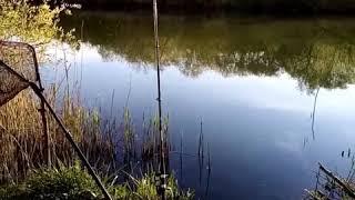 16 апреля 2020 г Весенняя рыбалка на карпа Река Майн заливе
