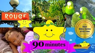 90 Minutes! COLORS, SHAPES & Songs! ★ Best Learning Videos ★ Babies Toddlers Kids Nursery