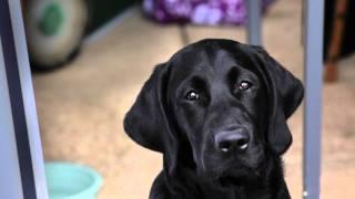 Canine Partners - Betchworth Park Golf Club