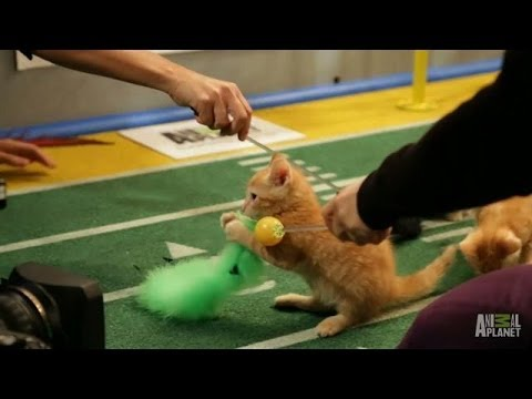 Choreographing Kittens | Puppy Bowl X
