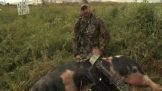 Utah Hog Hunt Promo