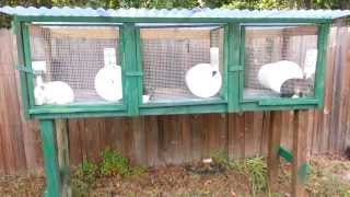 Starting To Raise Rabbits. New Rabbit Hutch
