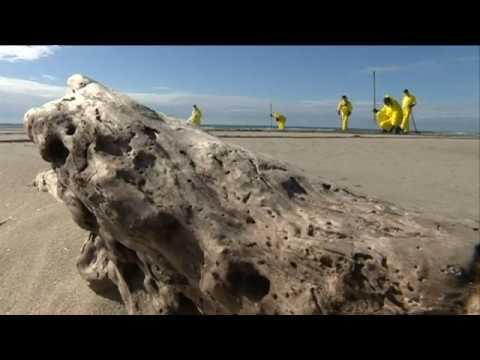Nettoyage de la plage de Piemanson