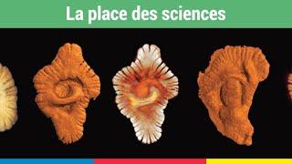Big Bang, trous noirs et univers multiples par Aurélien Barrau à l'Institut français de Casablanca