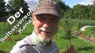Selbstversorgergarten Juni Teil 2