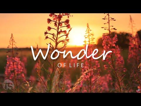 GEMA-freie Musik - WONDER OF LIFE | TerraSound