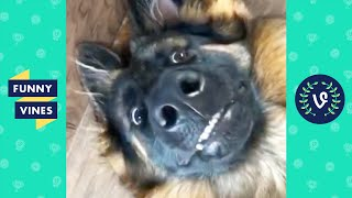 """PETS THAT MAKE YOU SMILE 😄 "" 