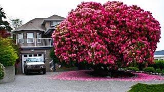10 cây cổ thụ đáng kinh ngạc nhất thế giới