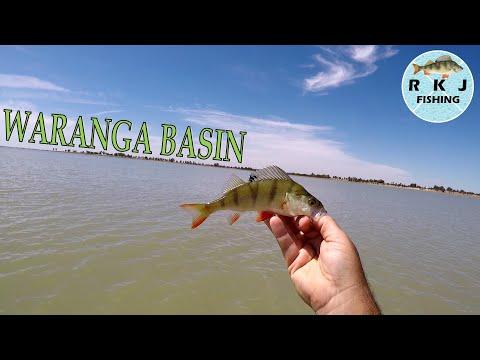 Waranga Wedfin! Redfin Fishing At Waranga Basin