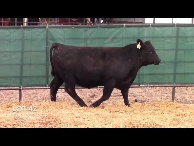 Taliaferro Angus \u0026 T Bar T Angus Ranch - 42