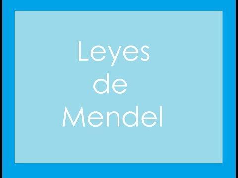 Leyes de Mendel (1/3) (Primera Ley)