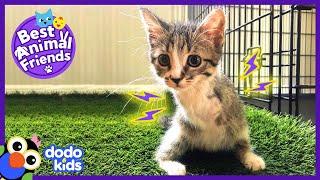 Zany TwoLegged Cat Loves Wrestling With Her Dog Best Bud | Best Animal Friends | Dodo Kids
