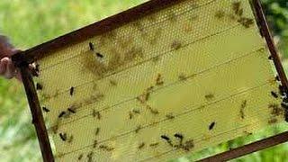 14. Когда нужно расширять семью (отводок).-Пчеловодство для начинающих.