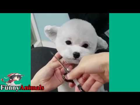 Cute Cat and Dog & Monkey Getting A Haircut Videos 2017