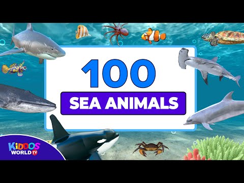 100 Sea Animals Flashcards -  Marine Animals for Kids - Learn Sea Animal Names