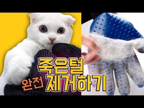 털뿜뿜고양이 죽은털 몽땅 제거하기!청소기타는 먼치킨(심쿵주의)모모네고양이 이야기 재미있는 인형극 어린이채널♡모모TV/모모토이즈