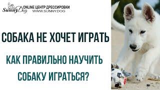 Собака не хочет играть в мяч. Как приучить собаку к игре? Правильная игра с собакой