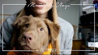 OBSESSED WITH MY DOG! | October Vlog