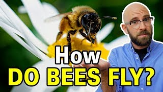 Is It True That Bumblebees Shouldn't Be Able to Fly?