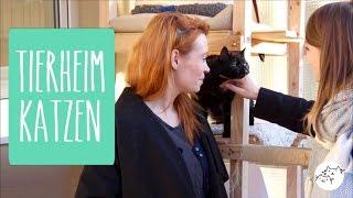 Eine Tierheim Katze adoptieren: Wie läuft eine Vermittlung ab? Kosten & Co.
