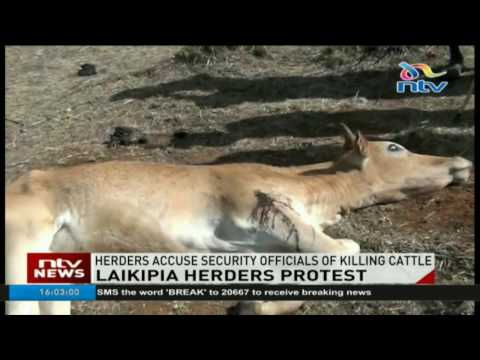 Laikipia herders accuse police of killing their cattle
