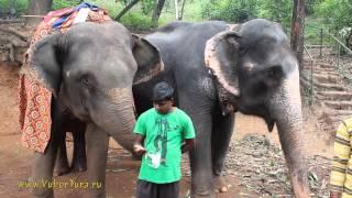 Индия. Экскурсия плантация специй vubortura