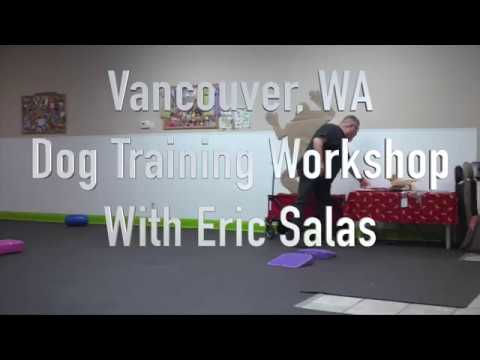 Training your show dog with Eric Salas