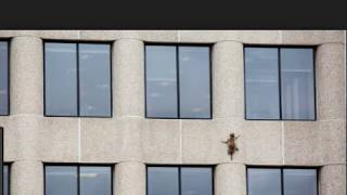 raccoon climbs skyscraper in St. Paul Minnesota,