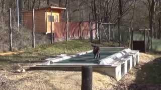 オオカミと人は共存できるのか?オオカミの可能性を試す為に作られた世界最大のトレッドミル(ルームランナー)