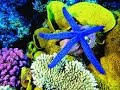 2017 HD Documentary On Coral - The Living Sea