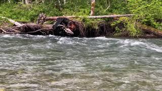 Recording Rushing River Sounds along Beaver Lake Trail, Darrington, WA