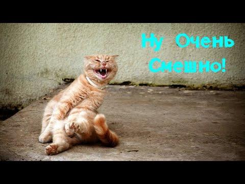 Смешные кошки коты приколы за 20 февраля