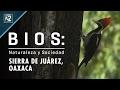 Video de Ixtlán de Juárez
