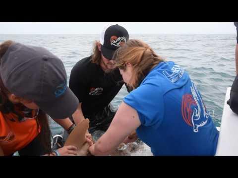 Malone University's shark-tagging adventure
