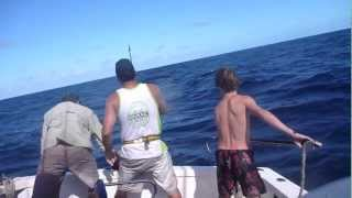 Game Fishing Aboard Dark Horse | 1000lb+ Tiger Shark !
