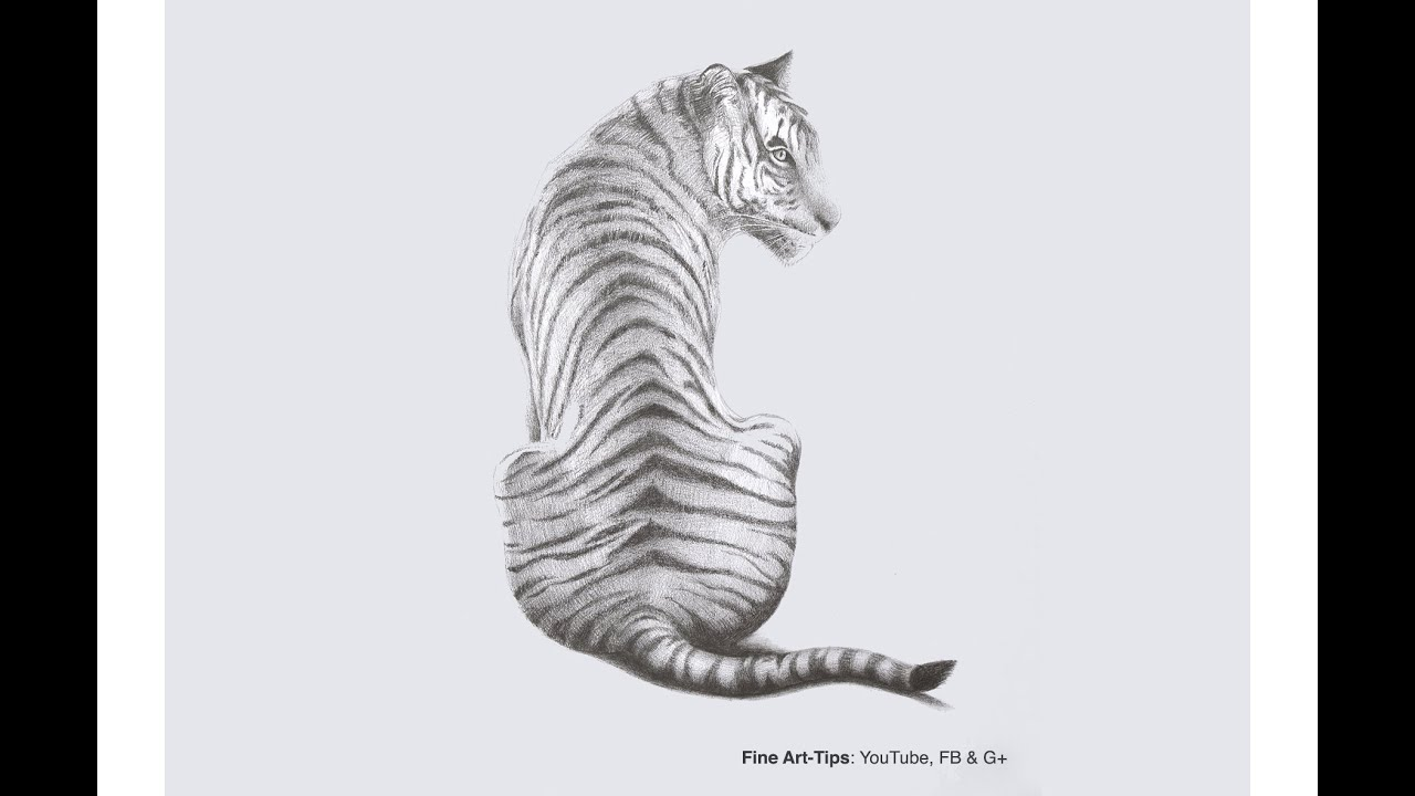 How to Draw a Tiger With Pencil - YouTube
