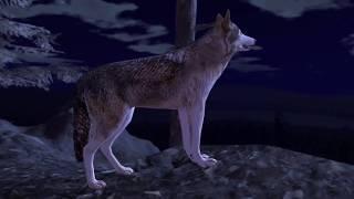 Baixar Ultimate Wolf Simulator 2, By Gluten Free games