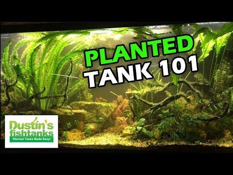 PLANTED TANK 101: The Basics