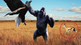 وهم القوة المفرطة - كانت نهاية النسر سيئة عند محاولته اصطياد هذه الحيوانات