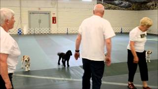 Great Falls Dog Training Club