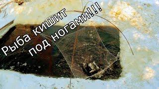 Мешок рыбы за пол часа Рыбалка на паук в секретном ручье