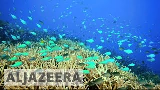 Australia's efforts to save the Great Barrier Reef