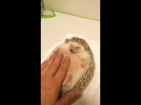 The Love Doctors - Hedgehog Belly Rubs To Smooth Jazz Sonic Theme!