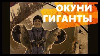 ОКУНИ ГИГАНТЫ на реке motława Рыбалка в Польше Рыбалка в Гданьске