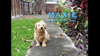 MAXIE: A Dog Day Quarantine Documentary