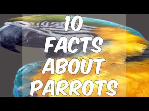 10 Facts About Parrots