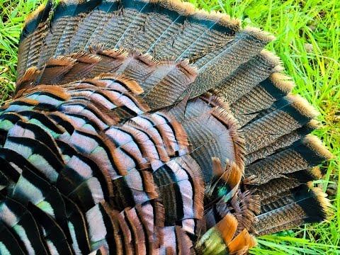 Rock County Turkey 2017
